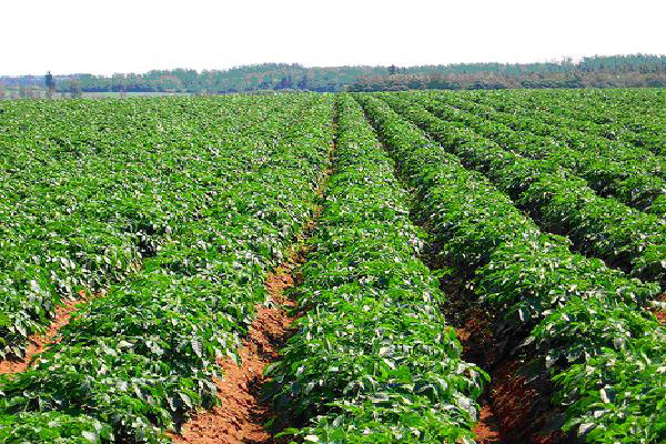 Food Needs in Agribusiness