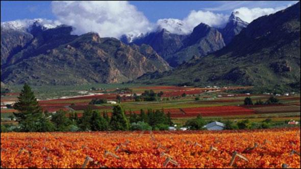 Wine Producers
