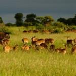 Emerging tourism entrepreneurs named