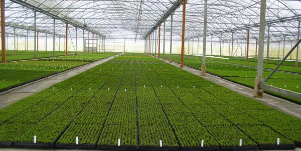 Sello Malatji - Horticulture